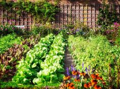 Top Secrets for a Continuously Productive Vegetable Garden