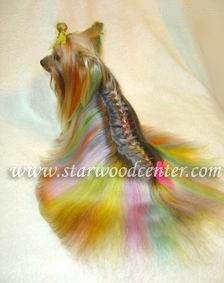 1000 Images About Creative Or Crazy Pet Grooming On
