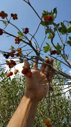 corbezzolo..frutti d'autunno