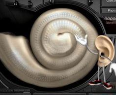 Não faça parte dos 28 milhões de brasileiros que sofrem de algum grau de perda de auditiva e zumbido! Baixe o software Hearing Guardian v1 agora!