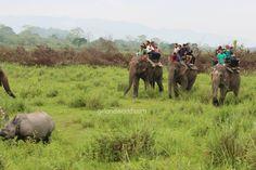 Kaziranga National Park latest pictures and information