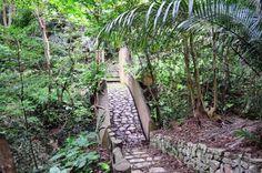 Tree Village l Okinawa Hai!  *Take 58 north, up near Cape Hedo and Hedo Point
