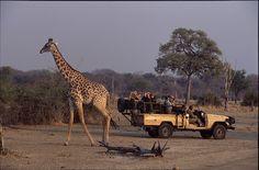 Parks, Safari, River Lodge, Giraffe, Animals, Types Of Animals, Wilderness, Tourism, National Forest