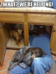 funny dog caption picture what we're helping under sink