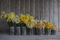 List of the best Daffodils to plant this fall, Pictured left to right: Yellow Cheerfulness, Sir Winston Churchill, Tahiti, Flower Drift, Petit Four, Orangery and Delnashaugh