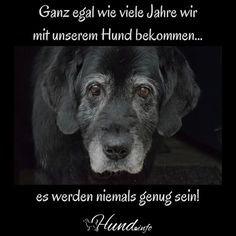 Ganz egal wie viele Jahre wir mit unserem Hund bekommen, es werden niemals genug sein!