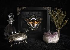 Deaths Head Moth Shadow Box, Taxidermy, Real Butterfly, Framed Butterfly, Preserved Butterfly, Victorian, Memento Mori, Gothic Decor by beyondthedarkveil on Etsy https://www.etsy.com/ca/listing/580970487/deaths-head-moth-shadow-box-taxidermy