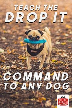 Training Your Puppy, Dog Training Tips, Potty Training, Agility Training, Training Classes, Dog Agility, Training Online, Leash Training, Toilet Training