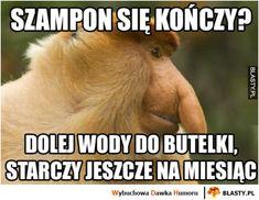 Szampon się kończy Funny Memes, Jokes, Language, Lol, Science, Good Things, Humor, Smile, Husky Jokes