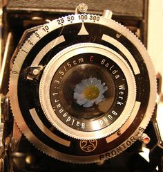 Old Camera daisy reflection