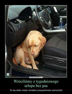 Od psów można się wiele nauczyć...