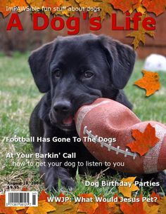 Make Your Own Dog Magazine Cover! | The Dog Guide