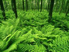 Verde é a cor da natureza
