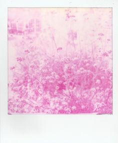 Flowers on Magenta Monochorme 600 Impossible Project  Polaroid Film