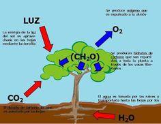 BIOLOGIA: procesos celulares.