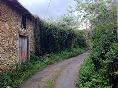 Esta es la entrada a nuestras huertas en Limanes, un paraiso natural.