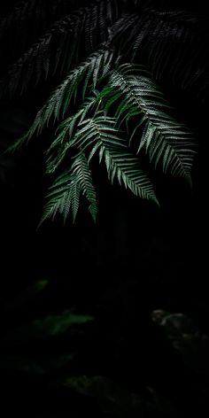 Desktop Wallpaper plant dark fern leaves hd for pc & mac, laptop, tablet, mobile phone Plant Wallpaper, Dark Wallpaper, Flower Wallpaper, Flowers Black Background, Plant Background, Fern Plant, Plant Leaves, Plant Painting, Parts Of A Plant