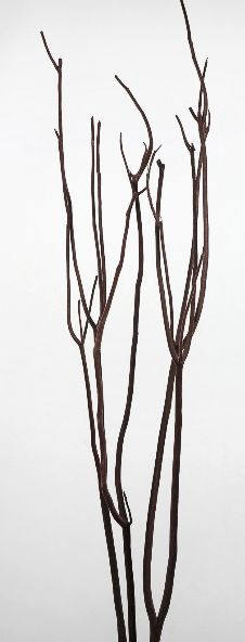 """Mitsumata Branches Natural Branch with Brown Velvet 48"""" (3 branches)"""