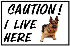 I LIVE HERE German Shepherd A5 sign on Vinyl mirrored to stick on inside of window.