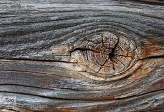 altes Holz by edzerdla