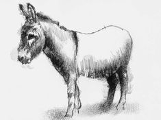 Artist Sean Briggs producing a sketch a day Donkey #art #donkey #drawing #sketch