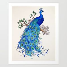 Peacock Art Print by Kristinasheufelt. Worldwide shipping available at Society6.com. Just one of millions of high quality products available.