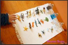 Montessori Zoología - Clasificando Animales | Creciendo con Montessori