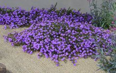 For along the fence, what about starting with a base planting of the purple trailing Lantana? Description from palmtalk.org. I searched for this on bing.com/images