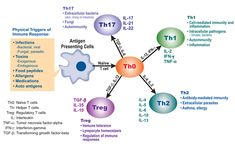 T cell subsets