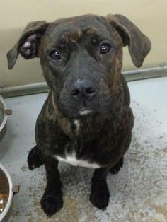 """>>>URGENT!!!!! SHELTER FULL!!!! PLEASE RESCUE """"LUCY""""!!!! (Sweetheart) KENNEL # 06 FOUND IN ELYRIA, OH...her owner has not come for her...NOW ADOPTABLE! Kennel # 06... to approved home only! LORAIN COUNTY DOG KENNEL...available for adoption NOW URGENT StatusVery Friendly Girl!"""