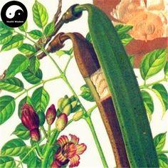 Buy Oroxylum Indicum Seeds Plant Oroxyli Tree For Herb Mu Hu Die Seeds Online, Chinese Herbs, Growing Plants, Cactus Plants, Herbalism, Plant Leaves, Flowers, Trees, Stuff To Buy