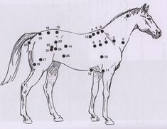Points de tension cheval-Meagher)