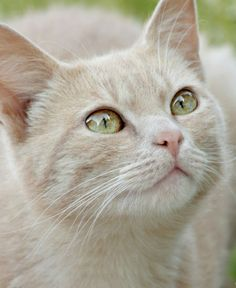 """~ watching the birdies ~ (=^.^=) Thanks, Pinterest Pinners, for stopping by, viewing, re-pinning, & following my boards.  Have a beautiful day! ^..^ and """"Feel free to share on Pinterest ^..^   #catsandme #cats"""