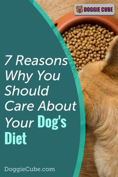 Many dog owners don't give enough thoughts to their dog's diet. But if you want your dog to live a long life of good health, then a good healthy diet for dogs is an important part of pet care. The diet need not necessarily be raw, but it must be nutritious. This also includes the treats you give to your dog. Besides weightloss, there're many other benefits of a good diet. You can learn more from this article. Best Healthy Diet, Dog Diet, Care About You, Best Diets, Dog Owners, No Cook Meals, Pet Care, Dog Food Recipes, Your Dog