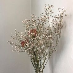 Image discovered by thevanishingocean. Find images and videos about cute, aesthetic and flowers on We Heart It - the app to get lost in what you love. Cream Aesthetic, Flower Aesthetic, Aesthetic Art, My Flower, Beautiful Flowers, White Flowers, Plant Wallpaper, No Rain, Land Scape