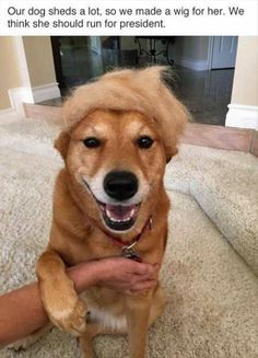 Funny Animal Pictures Of The Day – 24 Pics animals silly animals animal mashups animal printables majestic animals animals and pets funny hilarious animal Funny Animal Pictures, Dog Pictures, Funny Animals, Cute Animals, Animal Pics, Baby Animals, Funny Cute, The Funny, Hilarious