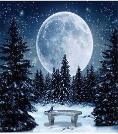 Illustration about Wonderful winter scene in at night with a brilliant moon lighting the scene. Illustration of moon, cold, star - 13368195 Christmas Scenes, Noel Christmas, Christmas Pictures, Homemade Christmas, Xmas, Winter Szenen, Winter Night, Adorable Petite Fille, Winter Painting