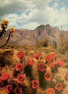 The Desert Southwest......Superstition Mountain, Apache Junction, AZ