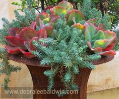 Sedum and Kalanchoe make a nice combination in this cast iron pot.