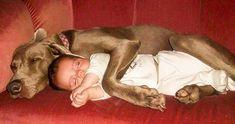 Pets With Cute Kids Unleash The Loads Of Cute Friendship Between Animals & Kids Love My Dog, Puppy Love, Animals For Kids, Baby Animals, Funny Animals, Cute Animals, Dog Cuddles, Dog Hugs, Pet News