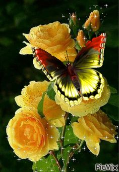 Wallpaper Nature Flowers, Rose Flower Wallpaper, Butterfly Wallpaper Iphone, Flowers Gif, Beautiful Flowers Wallpapers, Beautiful Flowers Garden, Beautiful Gif, Beautiful Butterflies, Beautiful Roses