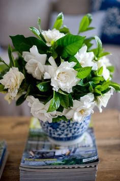Scout Spotlight: Baldridge Landscape...Gardenias, my favorite fragrant flower ever!arr