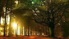 Merveilleuse Brocéliande où le soleil joue avec les arbres... Images, Country Roads, Celestial, Sunset, Landscape, Day, Plants, Outdoor, Fantasy