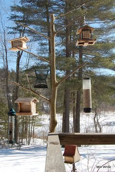 natural bird feeder holder - my creative baby sister did this.