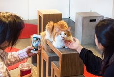 kittens and cat at these NYC cat cafes, which also host yoga and movie nights. Cafe Nyc, Camping With Cats, What Cat, Cats Musical, Cat Cafe, Cat Drawing, Pet Adoption, Things To Do, Kittens