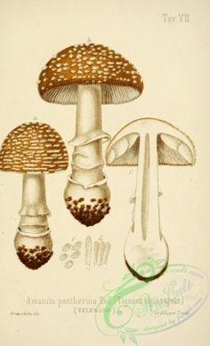 7 Best Mushroom images in 2013 | Stuffed mushrooms, Garden