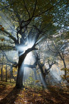Beautiful World, Beautiful Places, Peaceful Places, World Cities, City Landscape, Autumn Photography, Sun Rays, Coffee Art, Nature Scenes