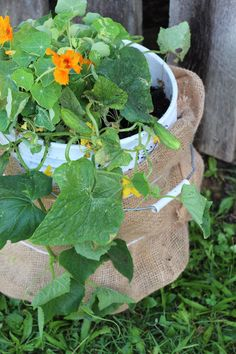 Grow a garden anywhere you have space by using 5-gallon buckets.