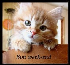 Bon Weekend, Kids, Image, Facebook, Google, Thinking About You, Handsome Quotes, Animaux, Kitty Cats