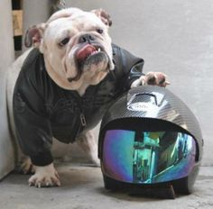 Bulldog Bikers | BaggyBulldogs
